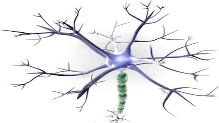 veronica, nueva neuropsicologa en crene